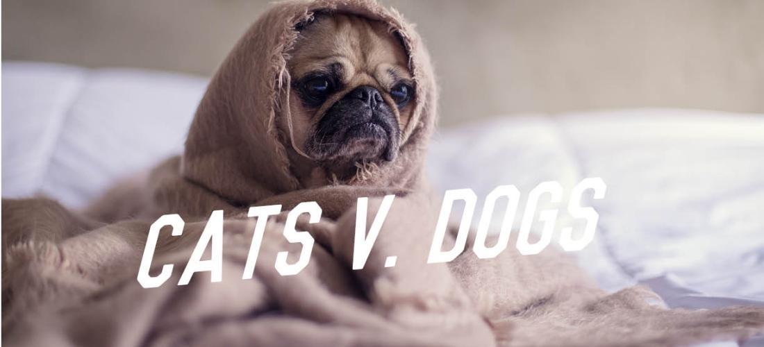 Cats versus Dog