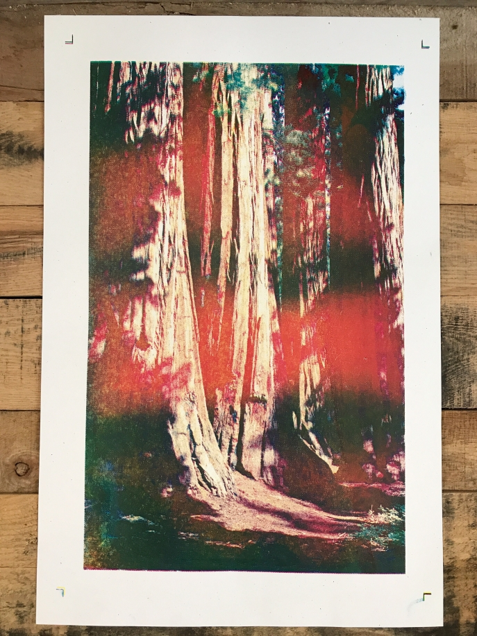Sequoia print cyan magenta and yellow