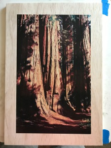Sequoia wood panel final